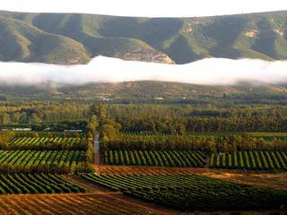 organic citus farming south africa